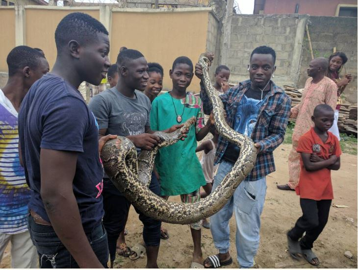 Huge python killed in a residential area