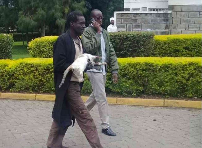 James Kimani Man jailed for selling cat meat