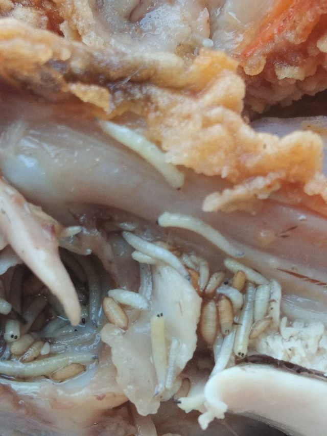 Kfc meal maggots | Airnewsonline