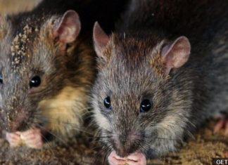 rats chew money cash inside ATM