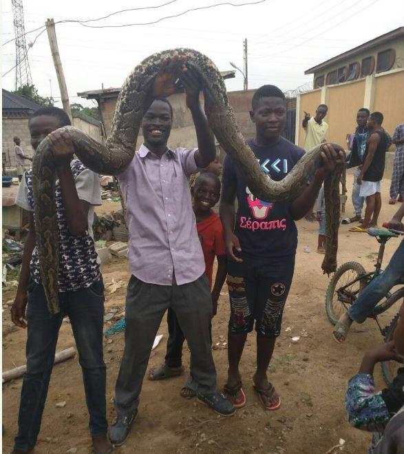 snake in residential area